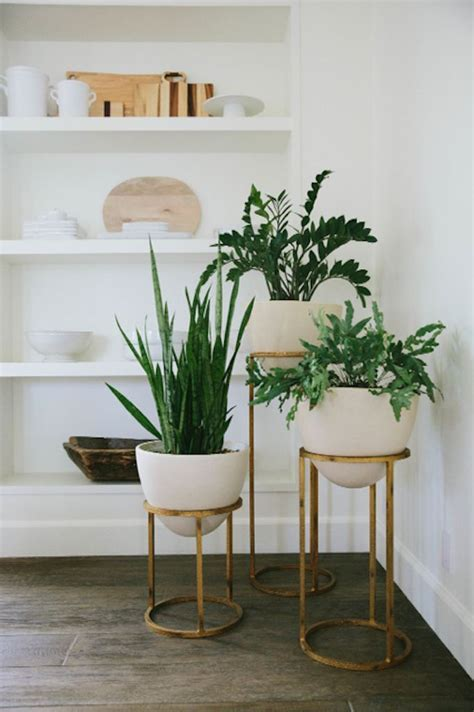 Plant Home Decor by Best 25 Indoor Plant Stands Ideas On