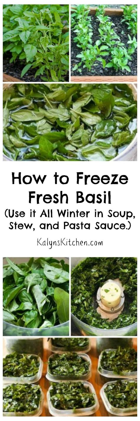 preserving fresh basil easily in the refrigerator with