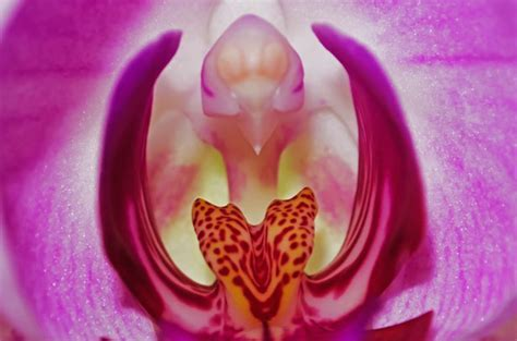 Orchid   Macro Free Stock Photo   Public Domain Pictures