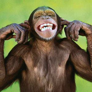 google images monkey talking funny monkey free lwp android apps on google play