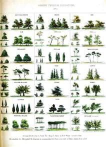 type of trees 25 best ideas about tree identification on pinterest