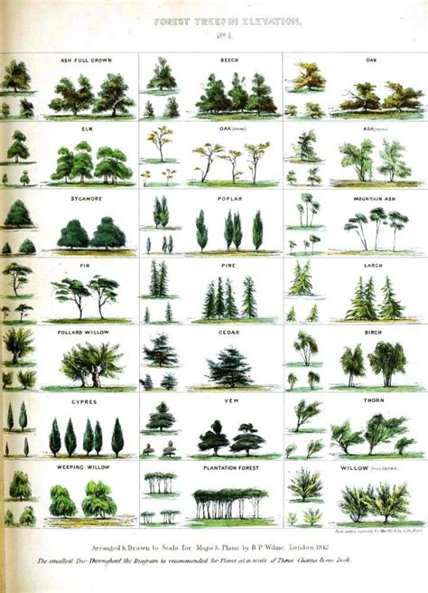 different types of trees 25 best ideas about tree identification on pinterest