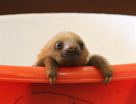 be a sloth ebook if it s hip it s here archives not just sloths baby