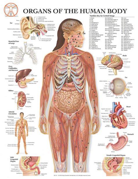 Human Parts Diagram