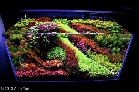 Freshwater Aquascaping Ideas by 17 Best Images About Aquascaping On Shallow