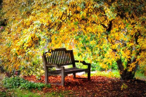 autumn garden autumn bench in the garden photograph by lynn bauer