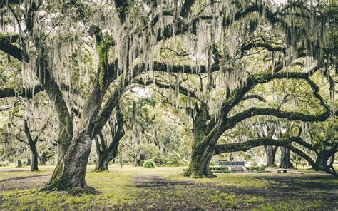 park new orleans things to do in new orleans outdoor attractions and activities