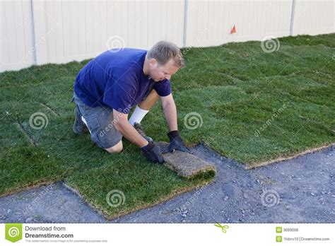 how to grow grass in backyard planting new sod grass yardwork stock photo image 9069008