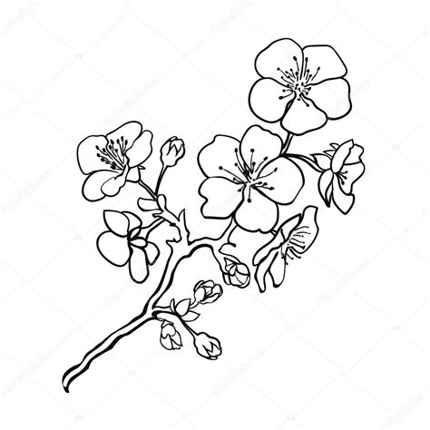 Cherry Blossom Branch Drawing Outline by Cherry Blossom Vector Outline Www Imgkid The Image Kid Has It