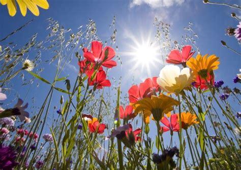 gocce fiori di bach a cosa servono cosa sono e come si usano i fiori di bach