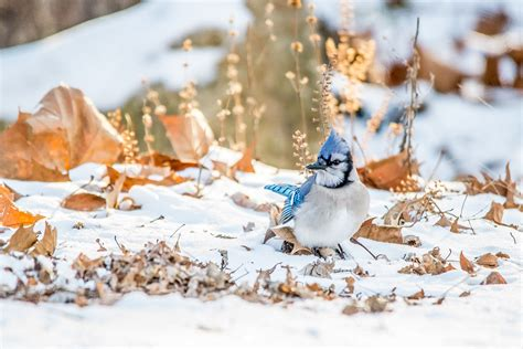 to help birds this winter go easy on fall yard work audubon