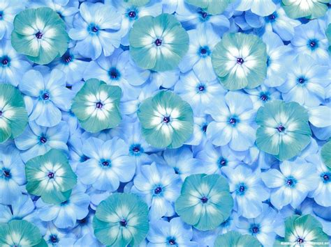 Blue Flower Power Point Flower Backgrounds For Powerpoint Www Pixshark