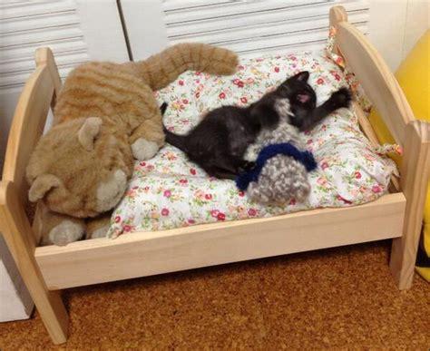 ikea cat bed the ikea quot cat quot bed