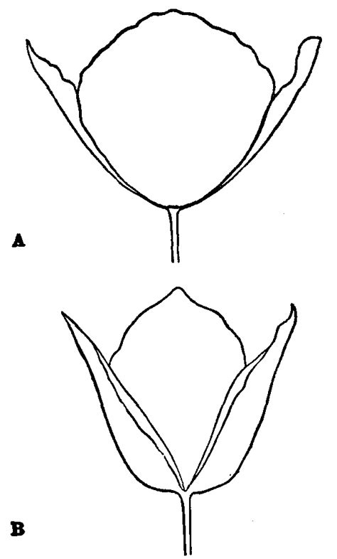 sycamore leaf coloring page sycamore leaf outline az coloring pages