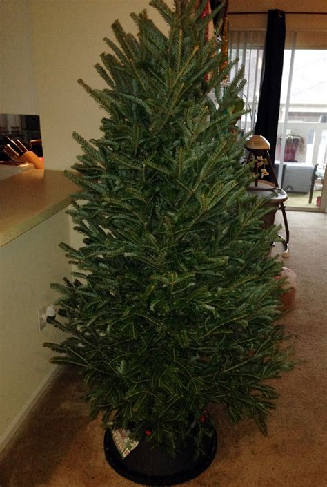 real christmas tree cost walmart real tree or why we say real is greener