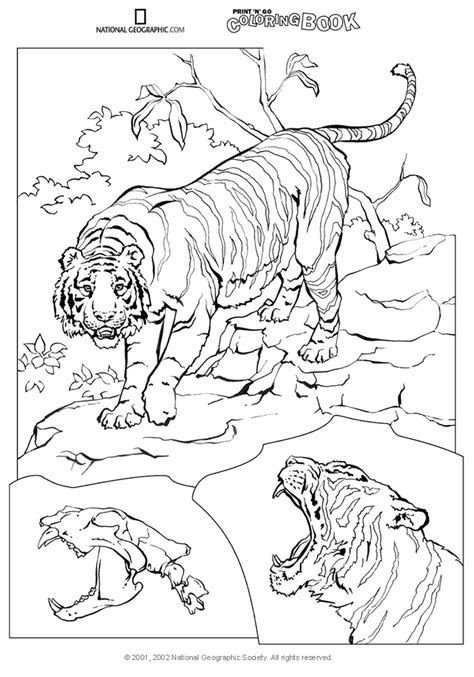 National Geographic Coloring Fish Coloring Pages National Geographic Coloring Pages
