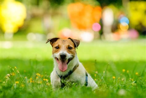parks that allow dogs the best pet friendly parks in henderson elysian at southern highlands