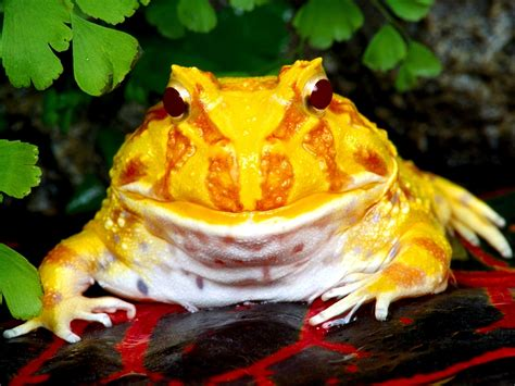 colorful frog free high definition wallpapers colorful frog wallpapers