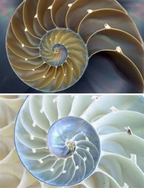 spiral pattern found in nature 17 captivating fractals found in nature webecoist