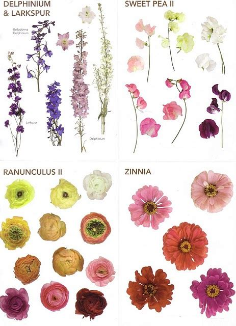 Types Of Flowers And Their Meanings by The Enchanted Petal November 2012