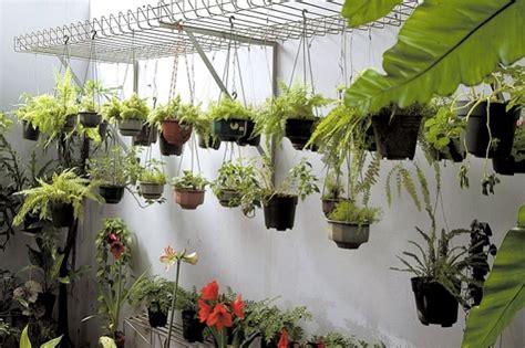 inilah  jenis tanaman hias gantung terfavorit