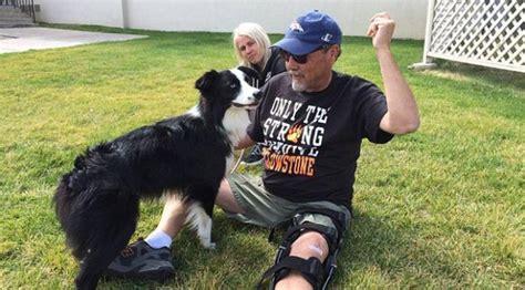 Hari Anjing Anjing Menghilang anjing tersesat ke penangkaran satwa buas global