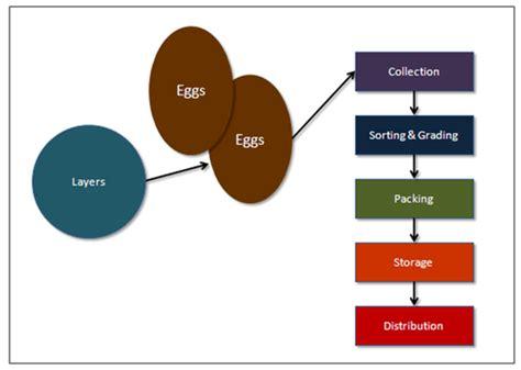 production business plan template egg production process poultry farming business plan