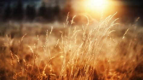 morning sunshine wallpapers hd wallpapers id
