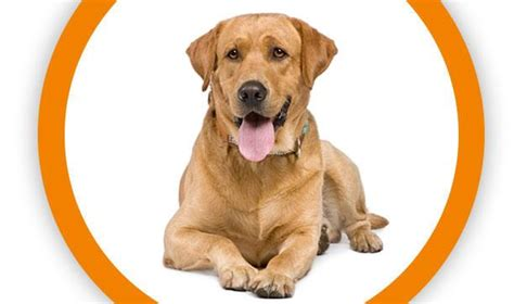 insurance for dogs pet insurance for dogs puppies quote petplan