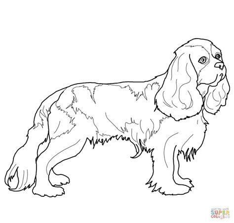 coloring pages of cavalier king charles spaniels coloriage cavalier king charles spaniel coloriages 224