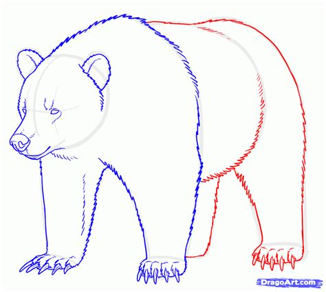 how to draw how to draw a grizzly step by step www imgkid