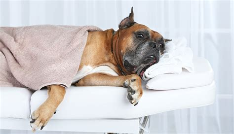dog house spa dog spa ideas you can do at home the dog house boutique