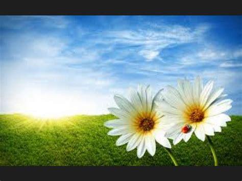 mundo maravilloso la flor 8467531452 lista la naturaleza un mundo maravilloso