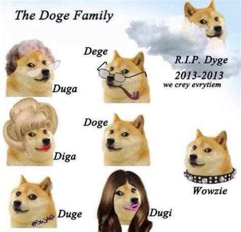 Know Your Meme Doge - doge family doge know your meme