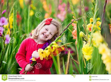 the flower childs play child picking fresh gladiolus flowers stock photo image 59567458