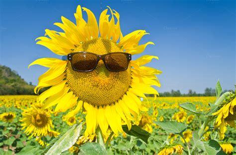 Sunflower S 1 sunflowers and the sun