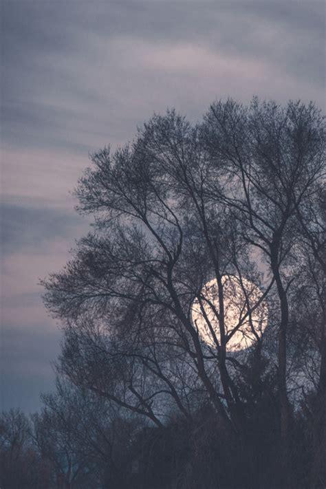 Sunrise Bathtub Pretty Sky Hipster Trees Indie Full Moon Grunge