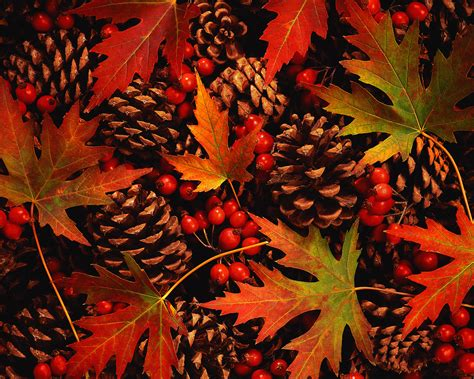 autumn color 301 moved permanently