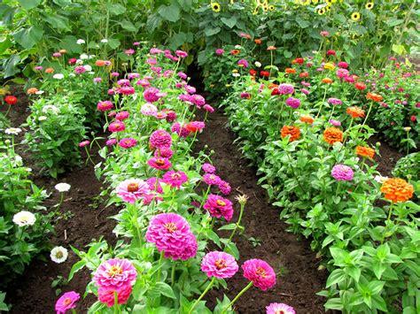 Bulbs Blooms The Year Of The Zinnia Zinnias Flower Garden