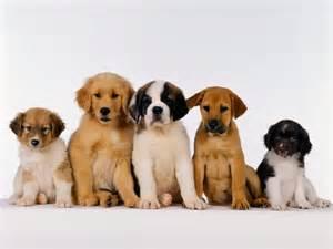 Cute puppy friends wallpaper wallpaper area hd wallpapers download