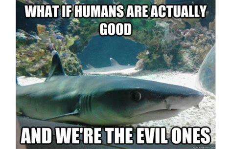 Funny Shark Meme - 66 best images about sharks on pinterest smosh sharks