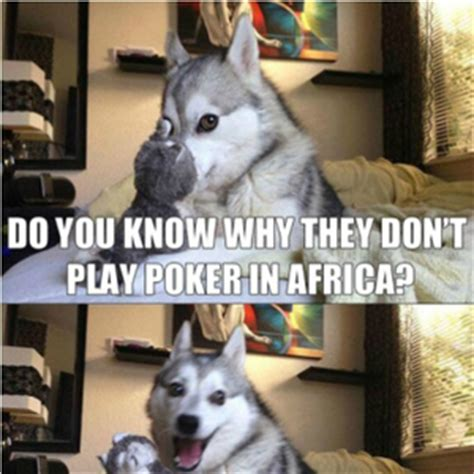Pun Husky Meme - you get nothing memes best collection of funny you get