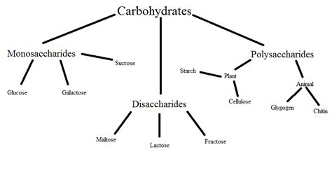 carbohydrates diagram starch carbohydrate diagram sketch coloring page