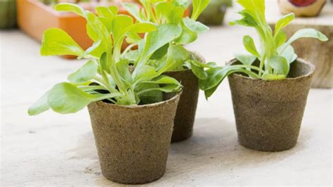 biodegradable plant pots growing containers for plants homelife biodegradable plant pots