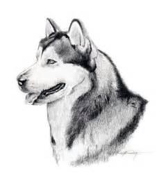 alaskan malamute dog pencil drawing art signed dj rogers