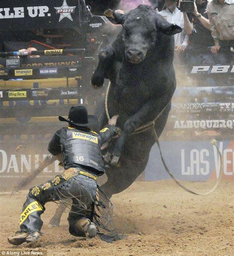 Bull Rage 25 Best Bull Ideas On