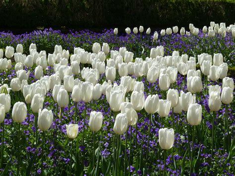 garten flora flora garten jamgo co