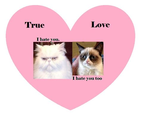 grumpy cat valentines day 90 best snarky valentines images on