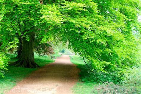 luscious green   university parks  oxford england