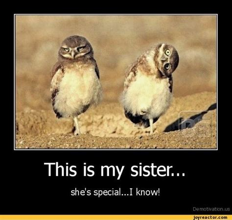 Funny Sister Memes - pin by jennifer thompson on family pinterest
